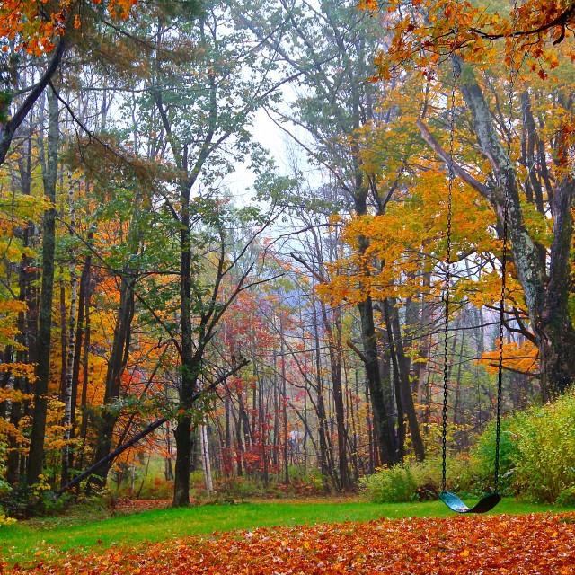 """""""fall backyard"""" stock image"""
