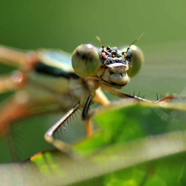 """Dragonfly 1"" stock image"