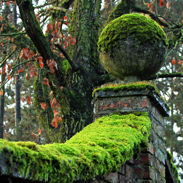 """wall with moss"" stock image"