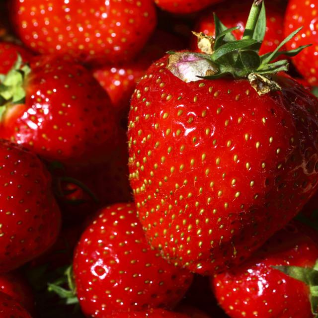 """Summer strawberries"" stock image"