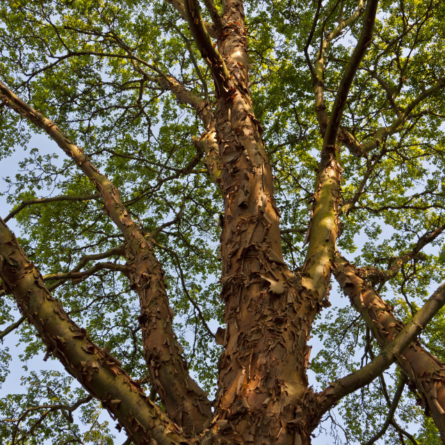"""""""Tree Branches and Bark"""" stock image"""