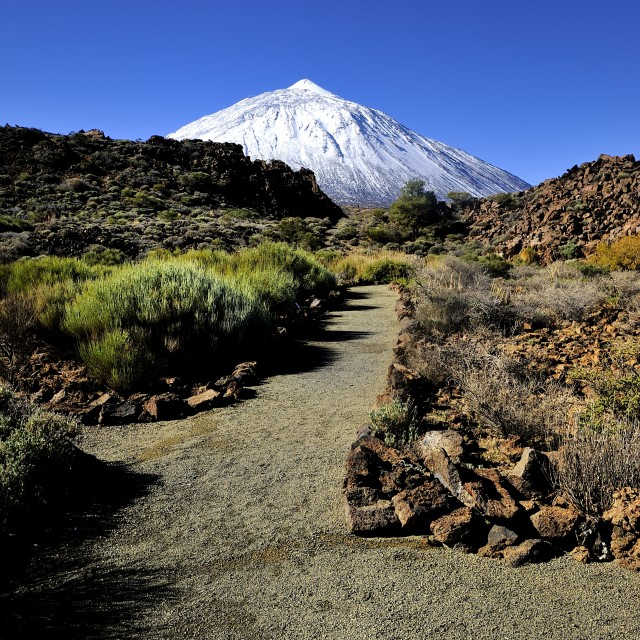 """""""Footpath to Mount Teide"""" stock image"""