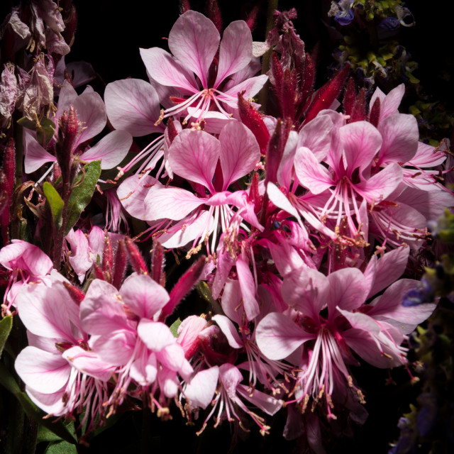 """Pink flower arrangement"" stock image"