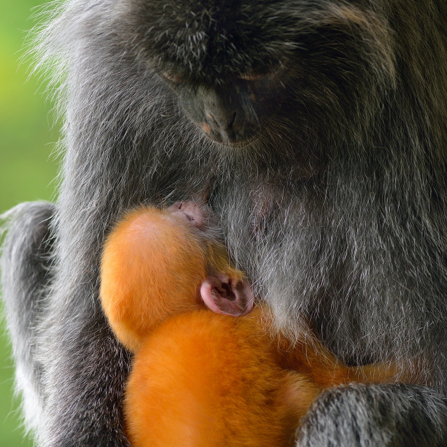 """""""Mother and baby"""" stock image"""
