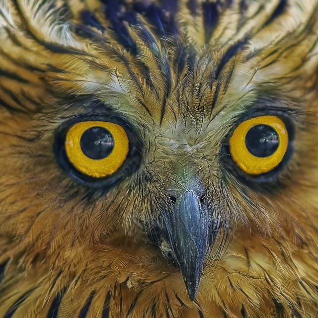"""""""Owl's eye"""" stock image"""