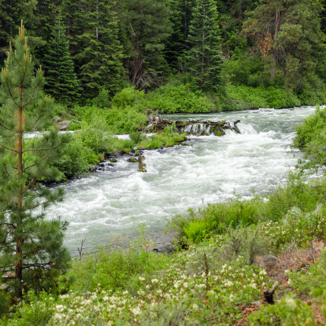 """""""Wild Deschutes River"""" stock image"""