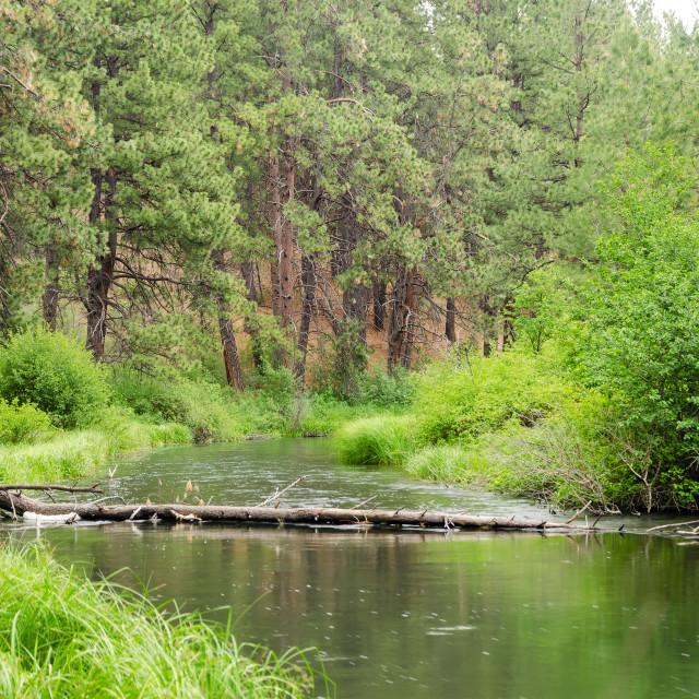 """Peaceful Deschutes River"" stock image"