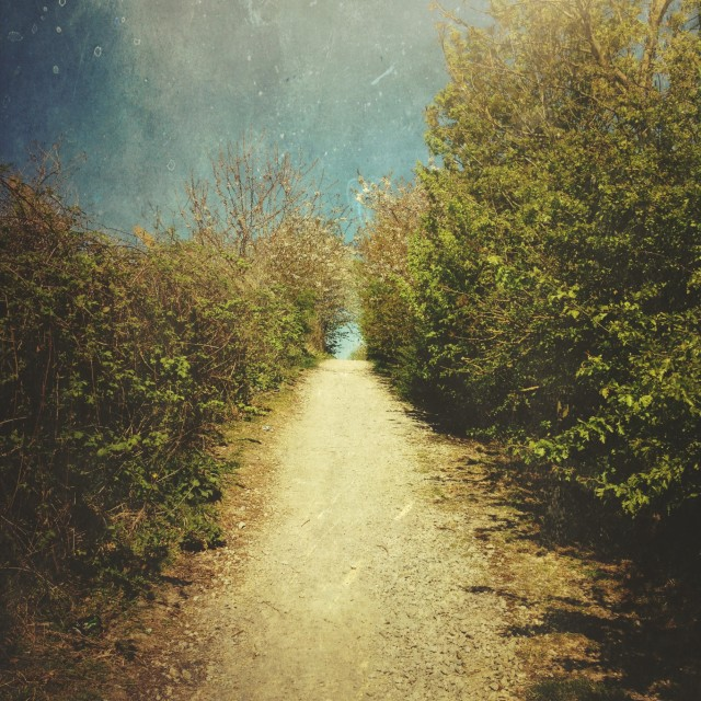 """""""Tree lined pathway"""" stock image"""