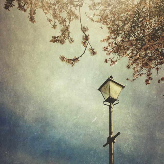 """Street light under cherry blossom"" stock image"