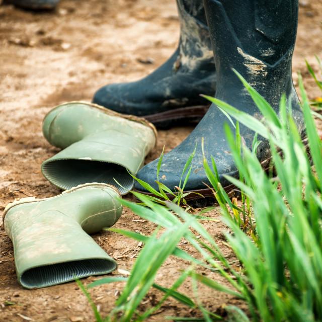 """Wellington Boots"" stock image"