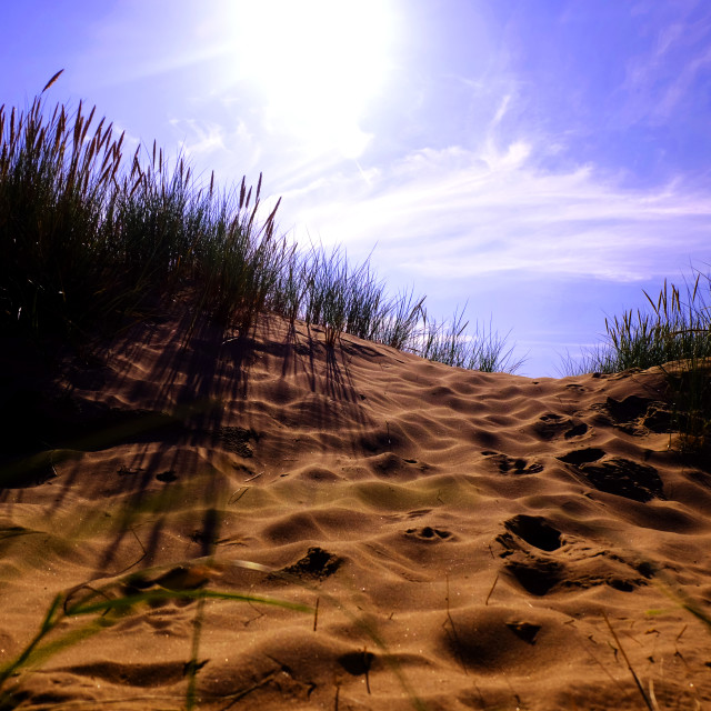 """Sunny Sand Dunes"" stock image"