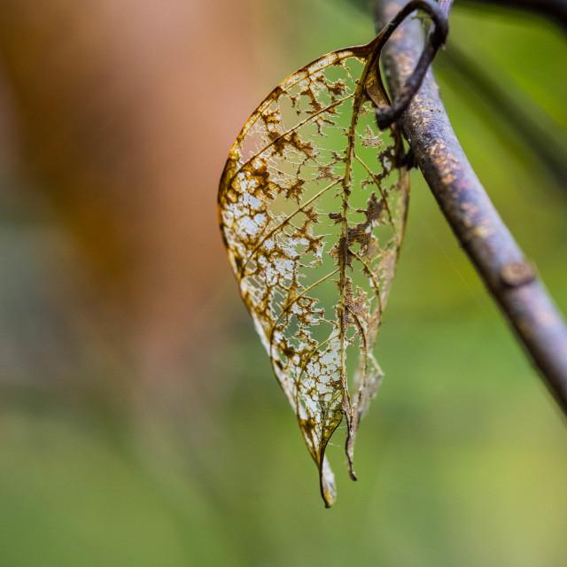 """Dry leaf"" stock image"
