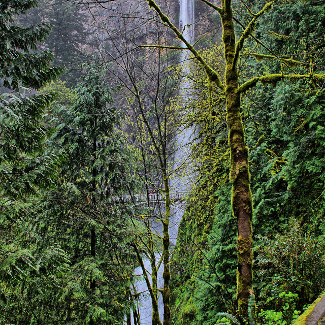 """multnomah falls in Oregon"" stock image"
