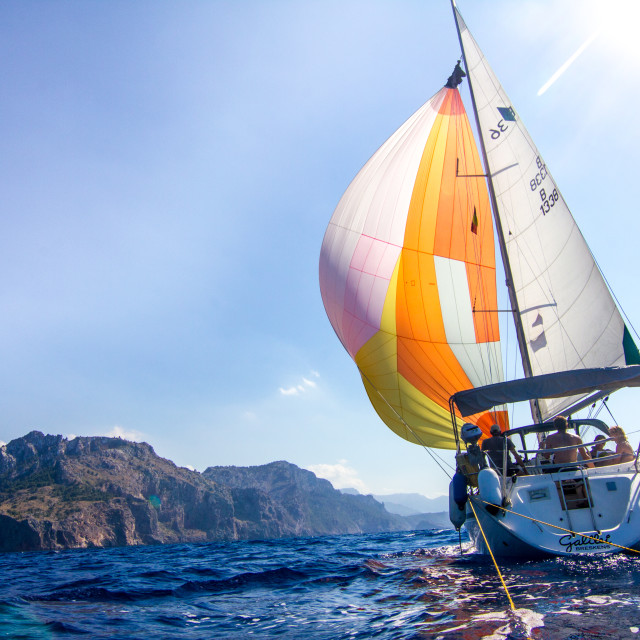 """Butterfly sailing"" stock image"