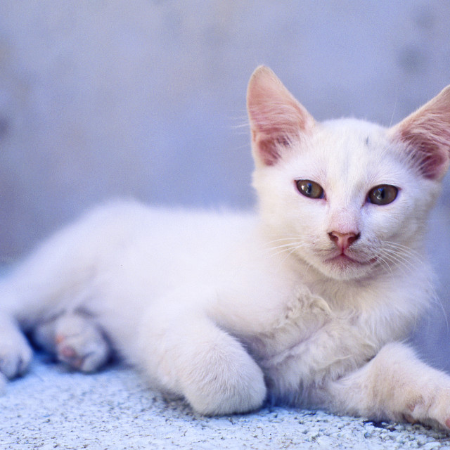 """Greek island kitten"" stock image"