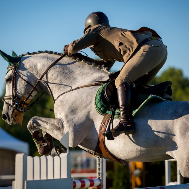 """Equestrian Sports"" stock image"
