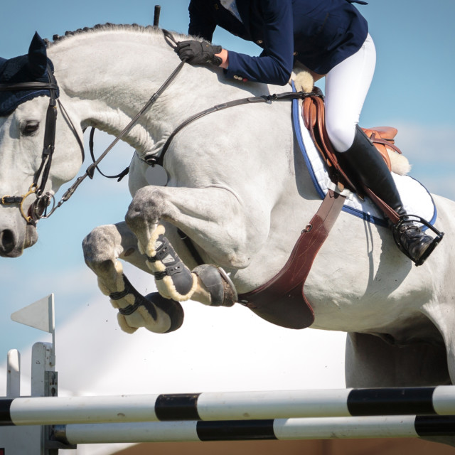 """""""Equestrian Sports"""" stock image"""