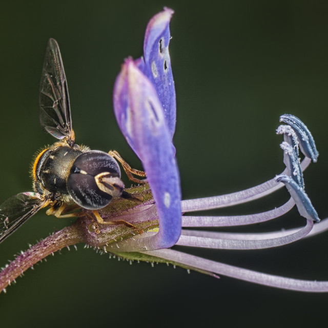 """""""Flora & fauna 1"""" stock image"""