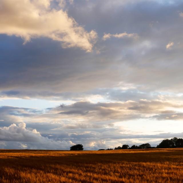 """Cotswolds Barley Field & Sunset"" stock image"