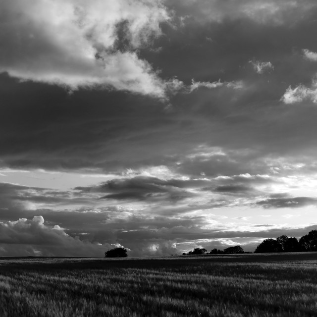 """""""Cotswolds Barley Field & Clouds Sunset Black & White"""" stock image"""