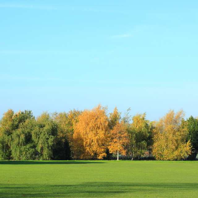 """Line of autumnal trees"" stock image"