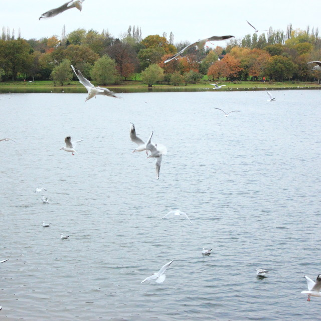 """Crazy seagulls"" stock image"