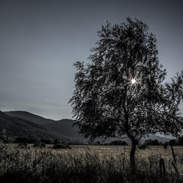 """""""The sunny tree"""" stock image"""