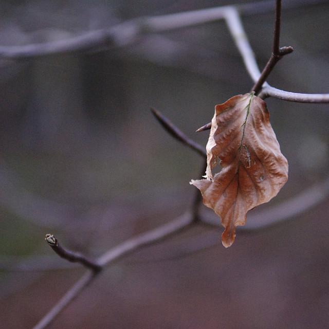 """Winter Leaf"" stock image"