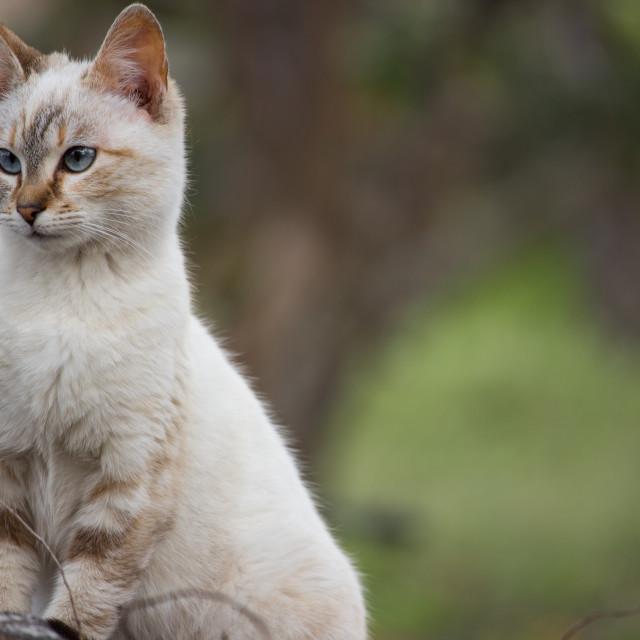 """cunning feline"" stock image"