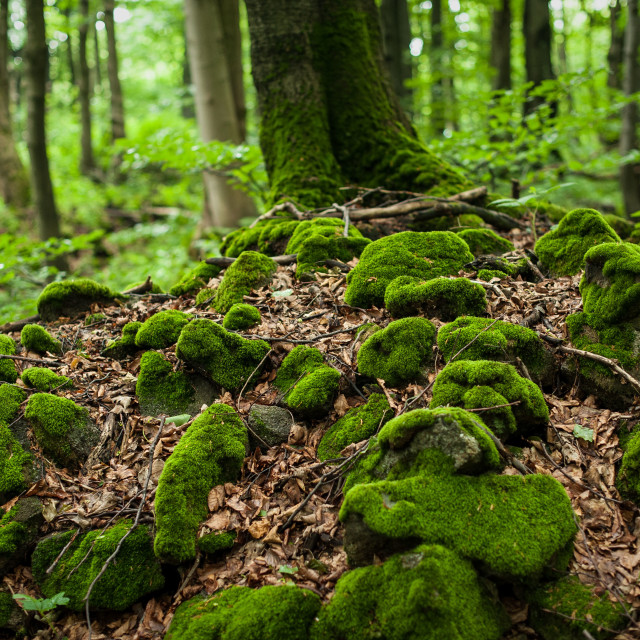 """""""Stones in the forest"""" stock image"""