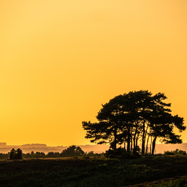 """Sunset Trees , New Forest National Park"" stock image"