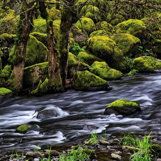 """Backcountry Stream in Oregon"" stock image"