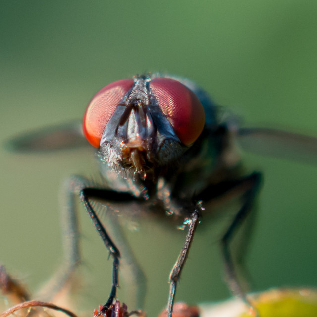 """Mosca"" stock image"