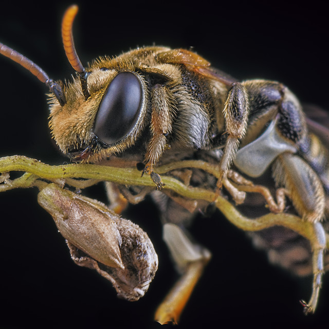 """Sweat bee & his broom"" stock image"