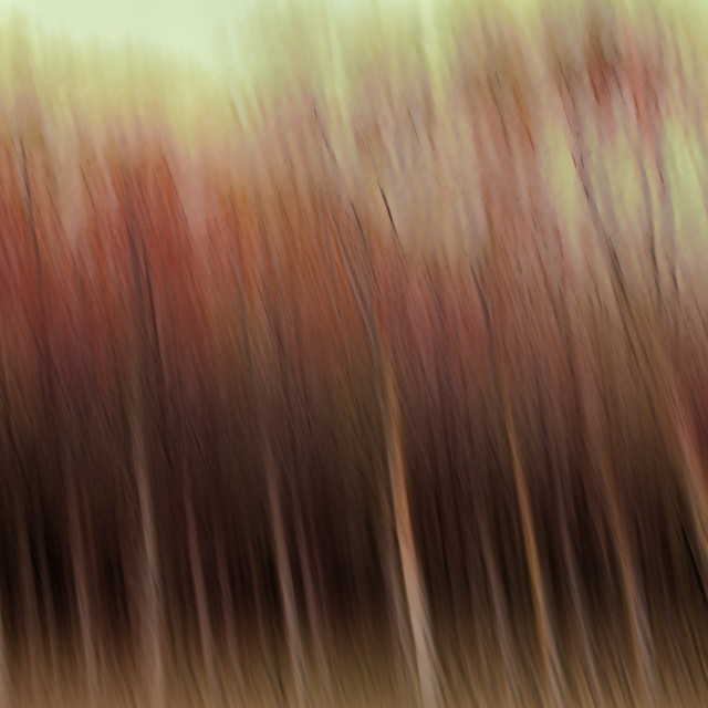 """""""Abstract trees"""" stock image"""