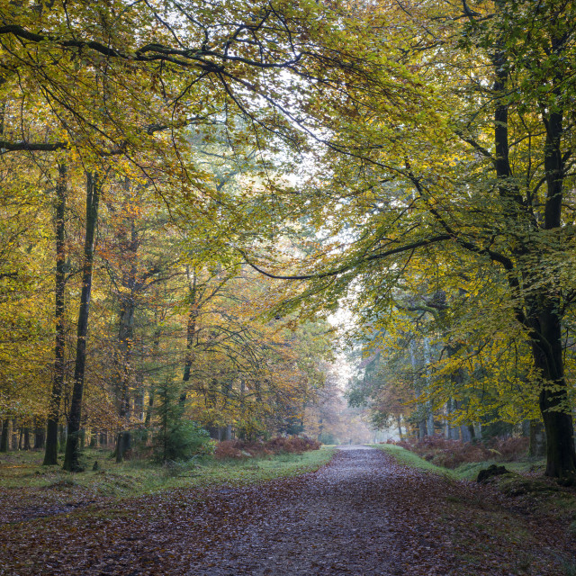 """Follow the path, New Forest - Poundhill inclosure"" stock image"