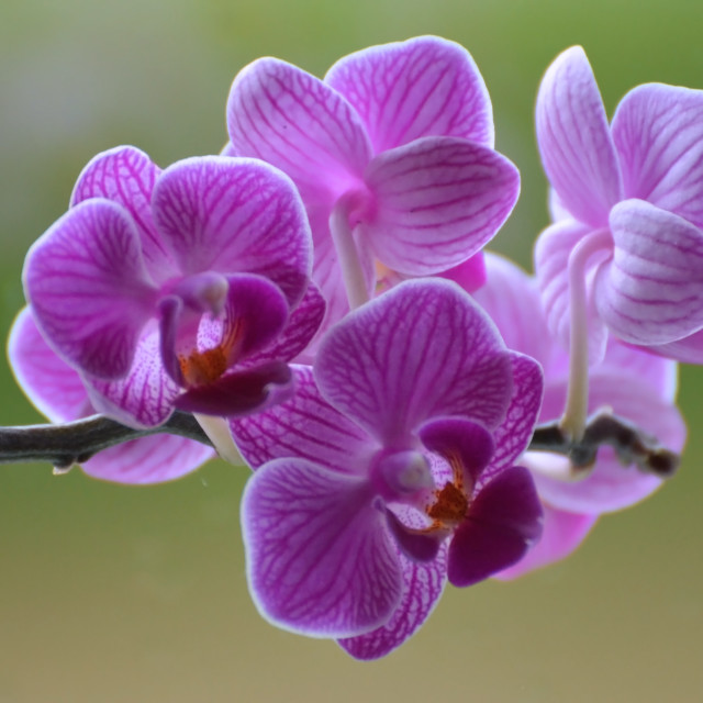 """""""Orchid delight"""" stock image"""