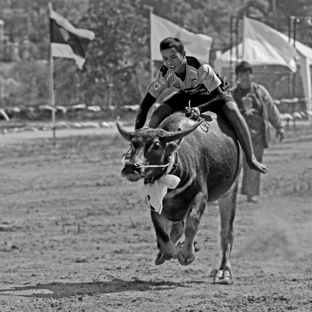 """Buffalo Racing Thailand"" stock image"