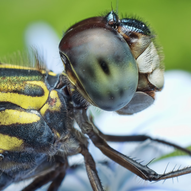 """""""dragonfly2"""" stock image"""