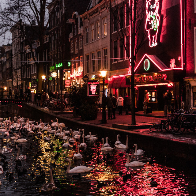 """Swans in Red Light District"" stock image"