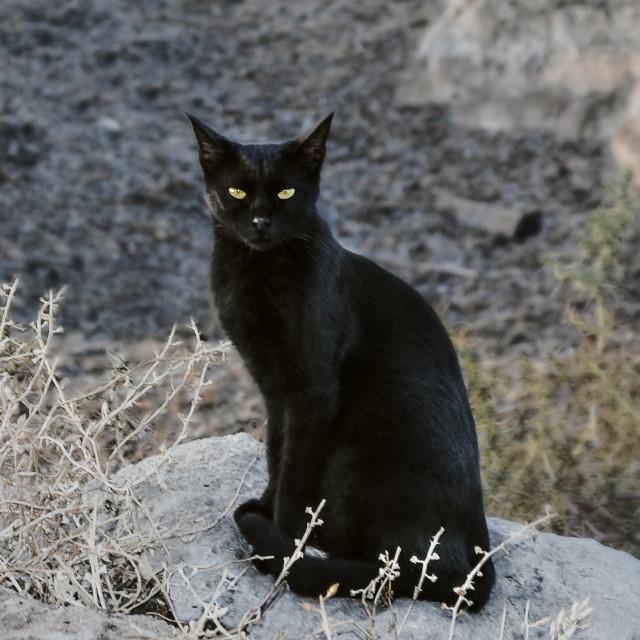 """Black cat"" stock image"
