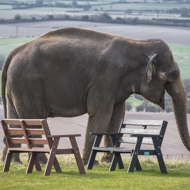 """""""Elephant & Benches!?"""" stock image"""