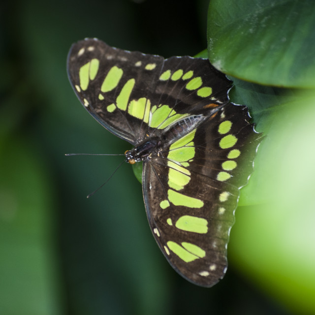 """""""Butterfly!"""" stock image"""