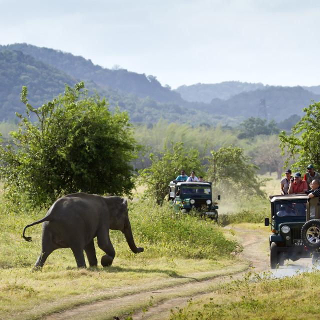 """Jeep safari in Minneriya national park"" stock image"