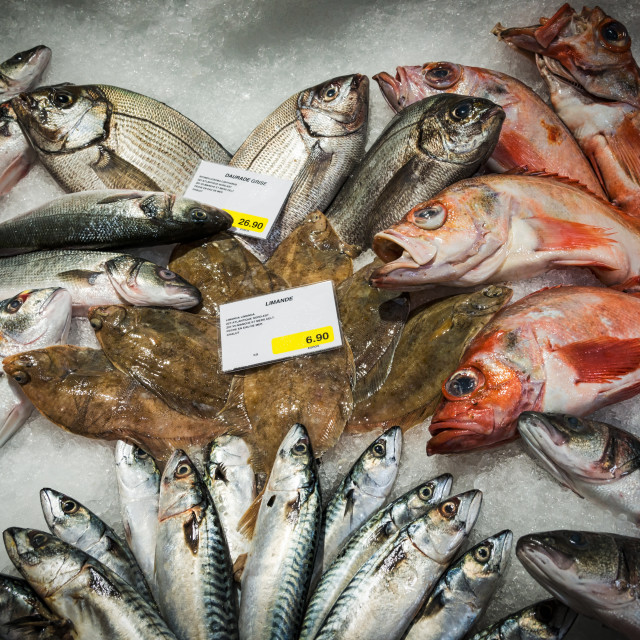 """Fish Counter"" stock image"