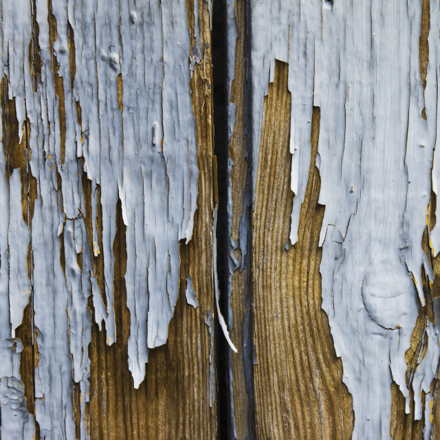 """Old planks with peeling paint"" stock image"