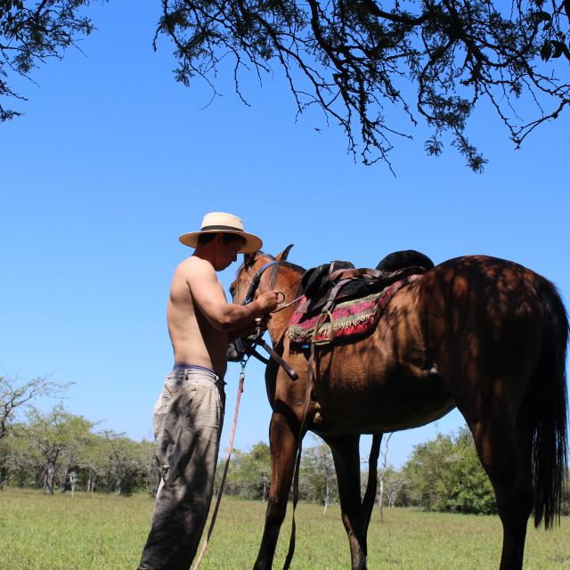 """Argentine Gaucho"" stock image"