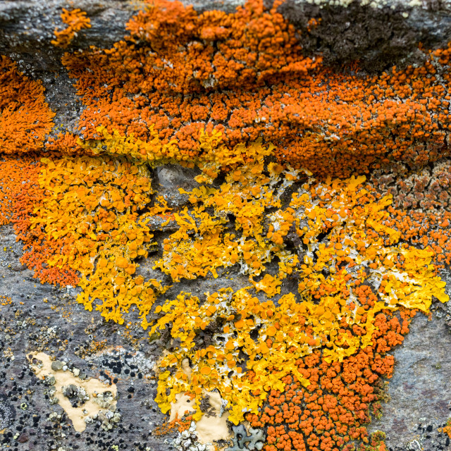 """Lichen on house stone foundation"" stock image"