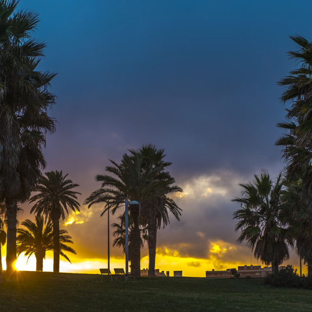 """""""Palms in a park in Barcelon"""" stock image"""