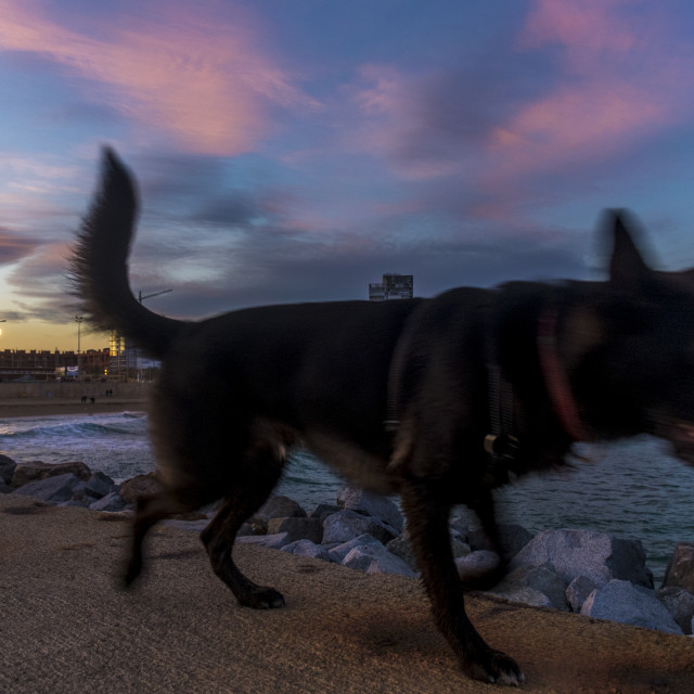 """Dog in the coast of Barcelona"" stock image"